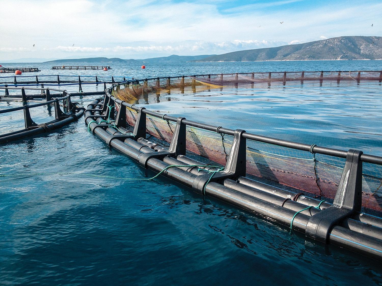 A Fish Farm In Turkey At Sea