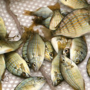 "Aquaculture And The ""Great Food Transformation"""