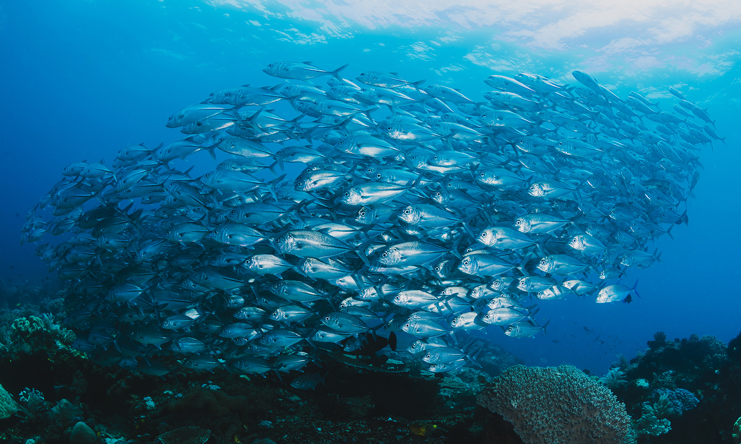 Micronesia President Orders Review Of Tuna Fishing Policies