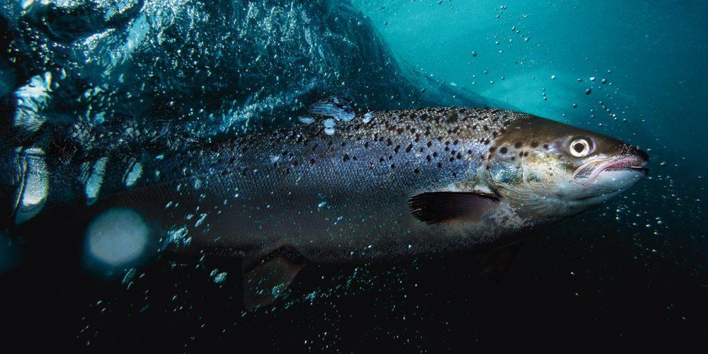 News – Aquaculture Magazine